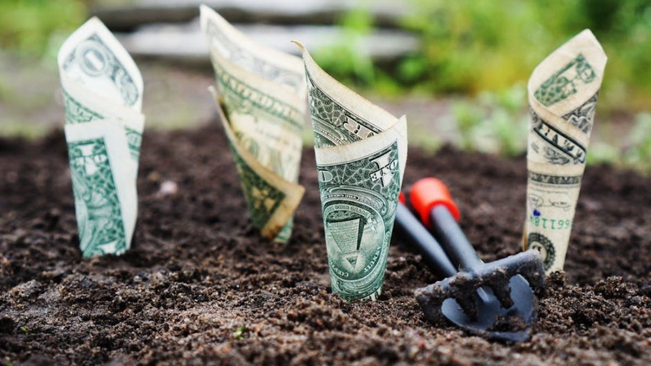 Grow Your Savings: 5 Tips to Move From Zero to Tangible Blog Post Image